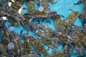 ghẹ biển