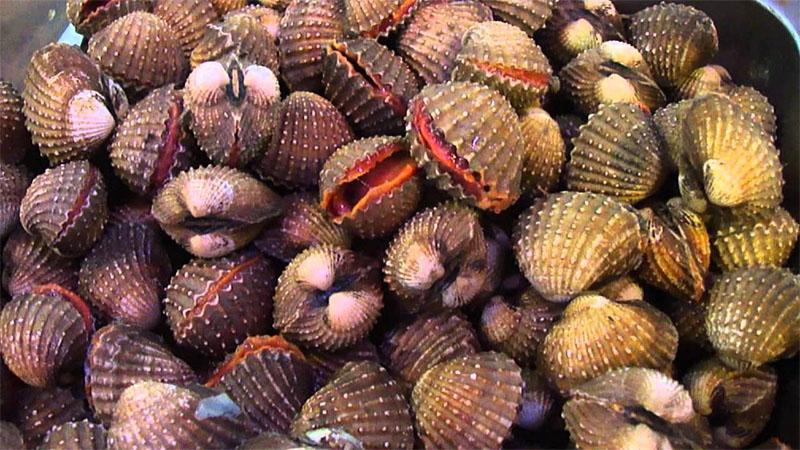 Sò huyết là một loại hải sản được nhiều người ưa chuộng